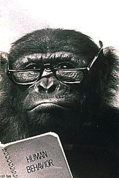 Chimpanzee reading Human Behavior book